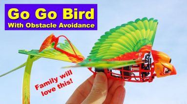 The RC Go Go Bird is inexpensive and fun for the whole family! Just don't fly it in the wind! Review
